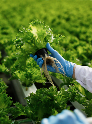 Innovation in FoodTech as a Way to Stop World Hunger